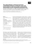 Báo cáo khoa học: The organotellurium compound ammonium trichloro(dioxoethylene-o,o¢)tellurate reacts with homocysteine to form homocystine and decreases homocysteine levels in hyperhomocysteinemic mice