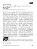 Báo cáo khoa học:  Transcription factor cAMP response element-binding protein CREB
