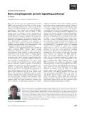 Báo cáo khoa học: Bone morphogenetic protein signaling pathways