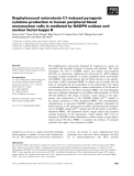 Báo cáo khoa học: Staphylococcal enterotoxin C1-induced pyrogenic cytokine production in human peripheral blood mononuclear cells is mediated by NADPH oxidase and nuclear factor-kappa B