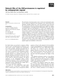Báo cáo khoa học: Subunit S5a of the 26S proteasome is regulated by antiapoptotic signals