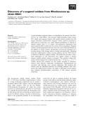 Báo cáo khoa học: Discovery of a eugenol oxidase from Rhodococcus sp. strain RHA1
