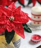 Đón năm mới cùng bình hoa trạng nguyên đỏ rực rỡ