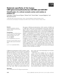 Báo cáo khoa học: Substrate specificity of the human UDP-glucuronosyltransferase UGT2B4 and UGT2B7 Identification of a critical aromatic amino acid residue at position 33