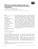 Báo cáo khoa học: TRPV1 at nerve endings regulates growth cone morphology and movement through cytoskeleton reorganization