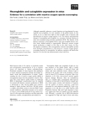 Báo cáo khoa học: Neuroglobin and cytoglobin expression in mice Evidence for a correlation with reactive oxygen species scavenging