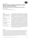 Báo cáo khoa học:  Muscle and neuronal nicotinic acetylcholine receptors Structure, function and pathogenicity
