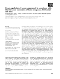 Báo cáo khoa học: Down-regulation of heme oxygenase-2 is associated with the increased expression of heme oxygenase-1 in human cell lines