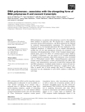 Báo cáo khoa học: DNA polymerase e associates with the elongating form of RNA polymerase II and nascent transcripts