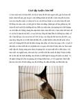 Cách tập luyện chim bổi