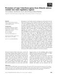 Báo cáo khoa học: Promoters of type I interferon genes from Atlantic salmon contain two main regulatory regions
