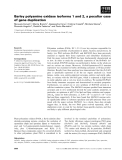 Báo cáo khoa học: Barley polyamine oxidase isoforms 1 and 2, a peculiar case of gene duplication