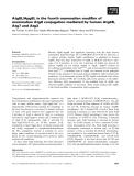 Báo cáo khoa học: Atg8L/Apg8L is the fourth mammalian modifier of mammalian Atg8 conjugation mediated by human Atg4B, Atg7 and Atg3