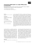 Báo cáo khoa học: Cytochrome P450 Cyp4x1 is a major P450 protein in mouse brain