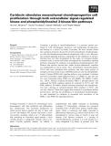 Báo cáo khoa học: Cartducin stimulates mesenchymal chondroprogenitor cell proliferation through both extracellular signal-regulated kinase and phosphatidylinositol 3-kinase⁄Akt pathways