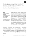 Báo cáo khoa học: Identification and characterization of two dipeptidylpeptidase III isoforms in Drosophila melanogaster