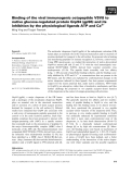 Báo cáo khoa học: Binding of the viral immunogenic octapeptide VSV8 to native glucose-regulated protein Grp94 (gp96) and its inhibition by the physiological ligands ATP and Ca2+ Ming Ying and Torgeir Flatmark