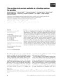 Báo cáo khoa học: The proline-rich protein palladin is a binding partner for profilin