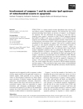 Báo cáo khoa học: Involvement of caspase 1 and its activator Ipaf upstream of mitochondrial events in apoptosis