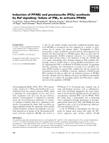 Báo cáo khoa học: Induction of PPARb and prostacyclin (PGI2) synthesis by Raf signaling: failure of PGI2 to activate PPARb