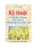 Kỹ thuật trồng lúa cao sản xuất khẩu ở Đồng bằng sông Cửu  Long