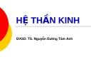 HỆ THẦN KINH - GVGD: TS. Nguyễn Dương Tâm Anh