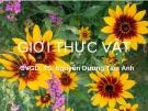 Giới thực vật - GV: TS. Nguyễn Dương Tâm Anh