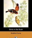 Birds In The Bush  By Bradford Torrey