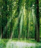 Vườn Quốc gia Bạch Mã -  Đa dạng sinh học động vật