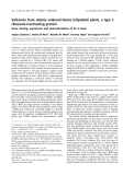 Báo cáo khóa học: Volkensin from Adenia volkensii Harms (kilyambiti plant), a type 2 ribosome-inactivating protein