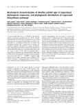 Báo cáo khoa học:  Biochemical characterization of Bacillus subtilis type II isopentenyl diphosphate isomerase, and phylogenetic distribution of isoprenoid biosynthesis pathways