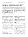 Báo cáo khóa học: Human PABP binds AU-rich RNA via RNA-binding domains 3 and 4