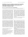 Báo cáo khóa học: Identification of a gene encoding Lon protease from Brevibacillus thermoruber WR-249 and biochemical characterization of its thermostable recombinant enzyme