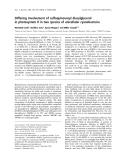 Báo cáo khóa học: Differing involvement of sulfoquinovosyl diacylglycerol in photosystem II in two species of unicellular cyanobacteria