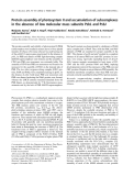Báo cáo khóa học:  Protein assembly of photosystem II and accumulation of subcomplexes in the absence of low molecular mass subunits PsbL and PsbJ