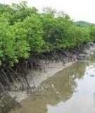 Môi trường – Hệ thực vật rừng ngập mặn
