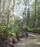 Giới thiệu rừng ngập mặn