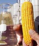 Ứng dụng thực vật trong sản xuất nhiên liệu sinh học
