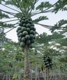 Kiến thức về Thực vật chuyển gen