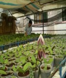 Công nghệ nuôi cấy mô tế bào thực vật