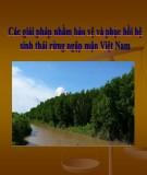 Thuyết trình: Các giải pháp nhằm bảo vệ và phục hồi hệ sinh thái rừng ngập mặn Việt Nam