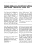 Báo cáo khoa học: Relationships between structure, function and stability for pyridoxal 5¢-phosphate-dependent starch phosphorylase from Corynebacterium callunaeas revealed by reversible cofactor dissociation studies