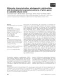 Báo cáo khoa học: Molecular characterization, phylogenetic relationships, and developmental expression patterns of prion genes in zebrafish (Danio rerio)