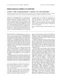 Báo cáo khoa học: Radical-induced oxidation of metformin