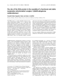 Báo cáo khoa học: The role of the ESSS protein in the assembly of a functional and stable mammalian mitochondrial complex I (NADH-ubiquinone oxidoreductase)