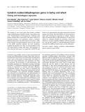Báo cáo khoa học: Cytokinin oxidase/dehydrogenase genes in barley and wheat