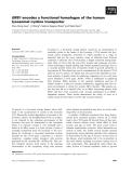 Báo cáo khoa học: ERS1 encodes a functional homologue of the human lysosomal cystine transporter