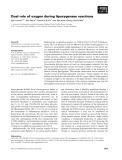 Báo cáo khoa học: Dual role of oxygen during lipoxygenase reactions