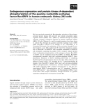 Báo cáo khoa học: Endogenous expression and protein kinase A-dependent phosphorylation of the guanine nucleotide exchange factor Ras-GRF1 in human embryonic kidney 293 cells