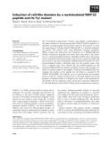 Báo cáo khoa học: Induction of raft-like domains by a myristoylated NAP-22 peptide and its Tyr mutant